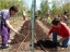 Planting Season has begun at the Common Good Gardens