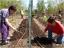Planting Season has begun at the Common Good Gardens